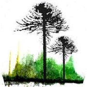 logotipo árboles llangka